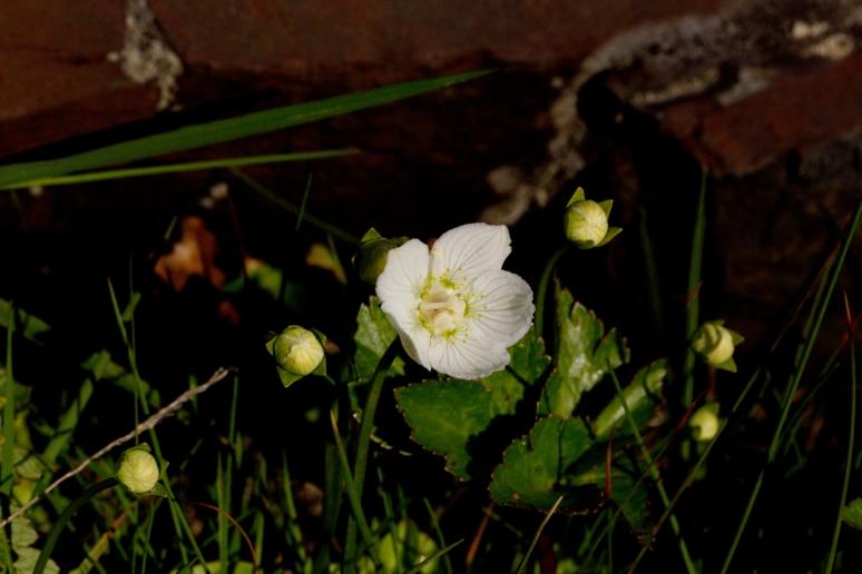 eenbloemig_wintergroen_5